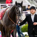 ノルマンディー出資馬の近況(2017/11/03)